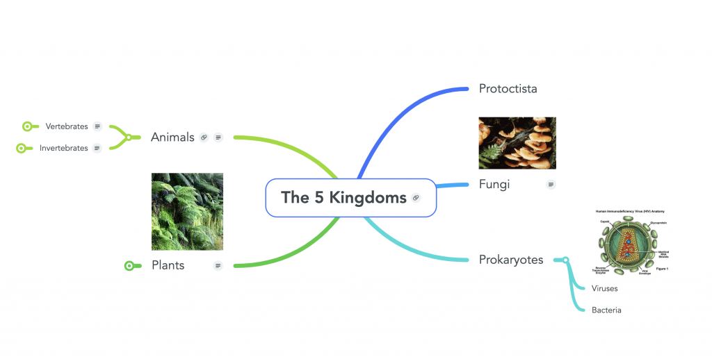 Mind map featuring the 5 kingdoms for biology.